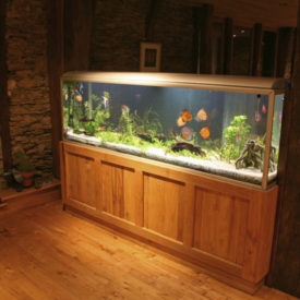 fish tank during the night